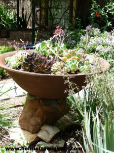 Rusted steel shallow planter with succulents