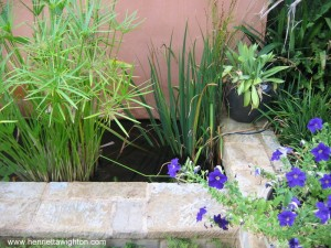 Rectangular water feature with aquatic plants